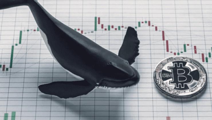 Balinalar yine dipten BTC topladı