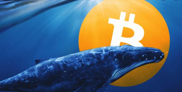 Balinalar Bitcoin biriktiriyor