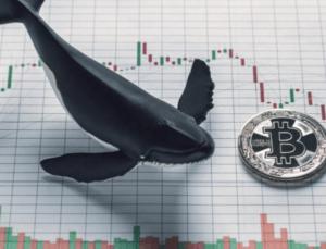 Bitcoin balina sayısında azalmanın sürdüğü tespit edildi